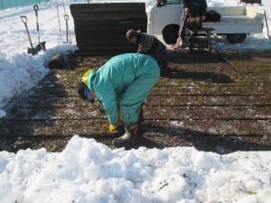 H27年12月4日雪の中から出荷①