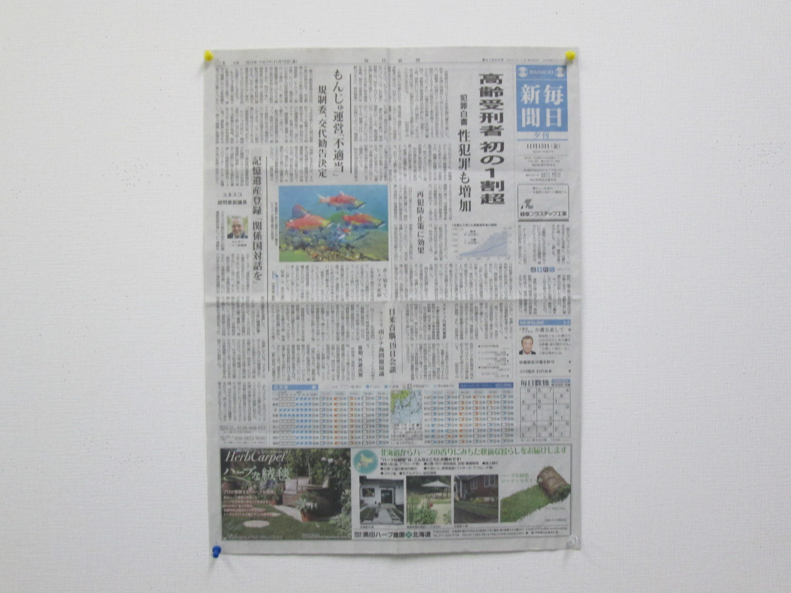 毎日新聞広告②